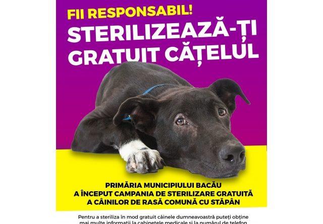 Primăria Bacău a lansat programul de sterilizare gratuită a câinilor comunitari